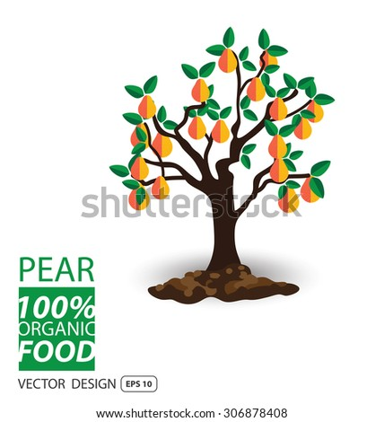 Pear, fruits vector illustration. - stock vector