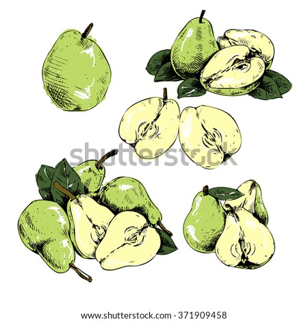 pear pears set leaf pear hand draw background retri style