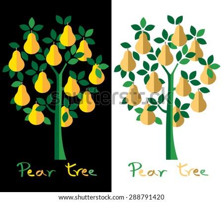 Pear tree set. Yellow pears vector illustration. - stock vector