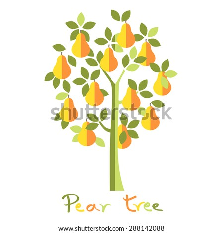 Pear tree. Yellow pears vector illustration. - stock vector