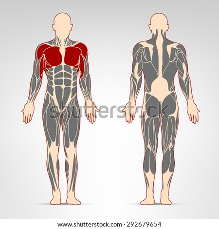 Pectoralis and deltoid muscles. Fitness training, man muscles workout.