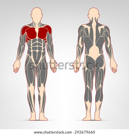 Pectoralis, and deltoid muscles. Fitness training, man muscles workout.