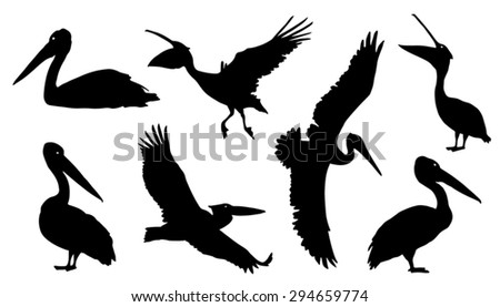 pelican silhouettes on the white background