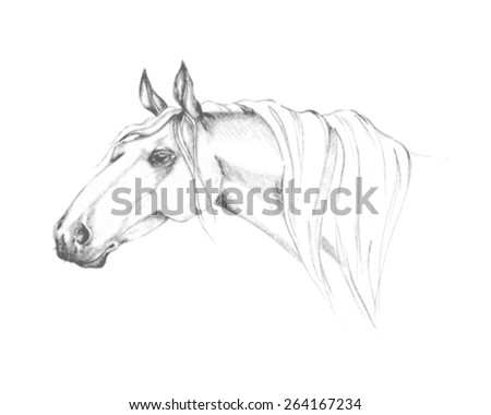 Pencil drawing of a horse - stock vector