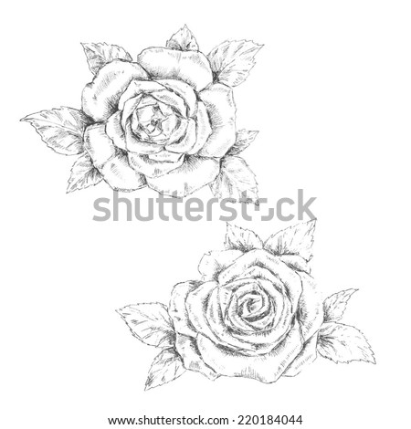 pencil sketch of the rose - stock vector