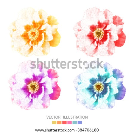 Peonies flower. Set of vector isolated illustration, EPS10. - stock vector