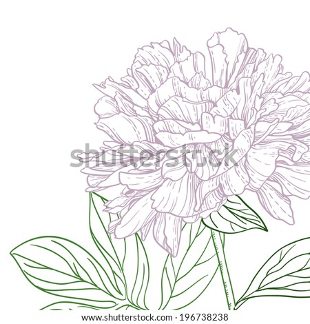 Peonies pink and green line art - stock vector
