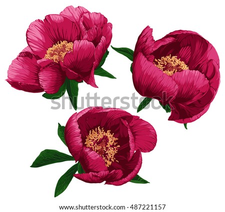 peony stock images  royalty free images   vectors bud light logo vector 2016 Coors Light Logo Vector