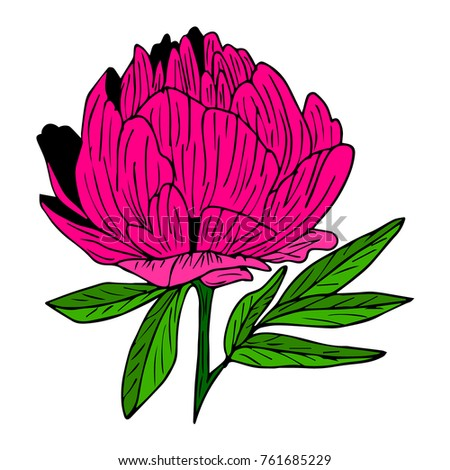 peony vector illustration doodle style design stock vector 761685229 rh shutterstock com penny vector penny vector free