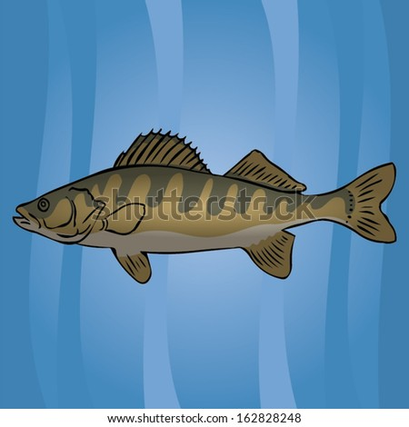 Perch in the water. - stock vector