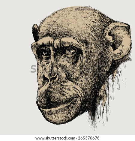 Pet monkey, chimpanzee, hand-drawing. Vector illustration. - stock vector