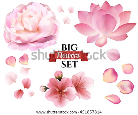 Petals and rose, sakura, peony and lotus flowers on white background. vector editable elements, eps10 floral template - stock vector