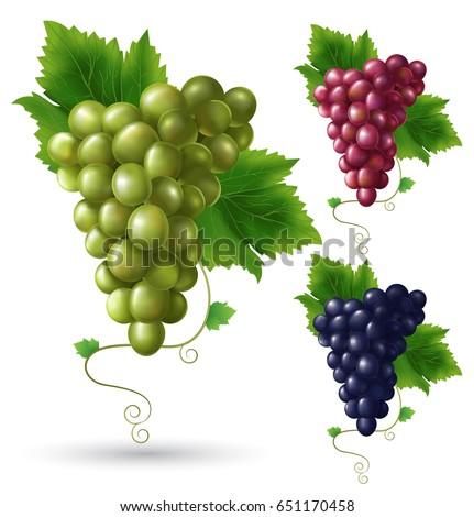 Photo realistic grape set. Full editable, isolated on white. Green grape, red grape, black grape.