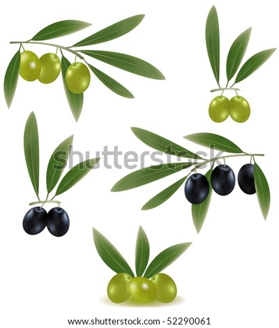 Photo-realistic vector illustration. Green and black olives with leaves.