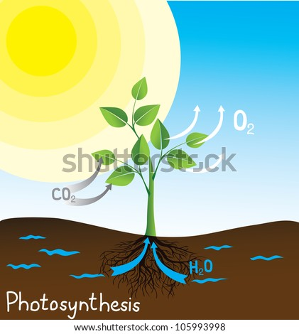 photosynthesis vector image, simple scheme for students - stock vector