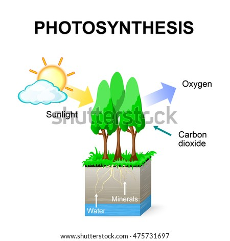 photsynthesis video