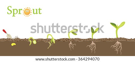 Pictures of a plant growing from seed to plant - stock vector