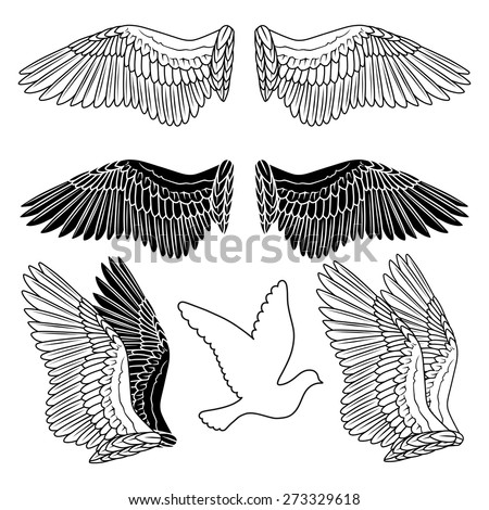 Pigeon wings and dove linear silhouette isolated on background - stock vector