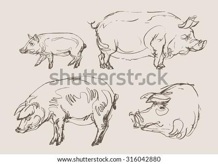 pigs vector, hand draw sketch  - stock vector