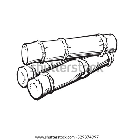 Pile of fresh raw green sugar cane, sketch style vector illustration isolated on white background. black and white hand drawing of sugarcane, Jamaican rum ingredient