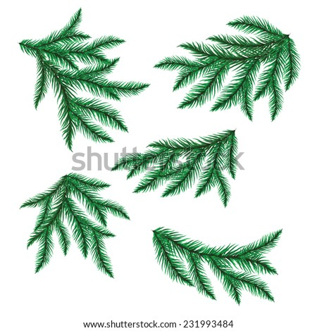 Pine branch isolated on white. Vector illustration.  - stock vector