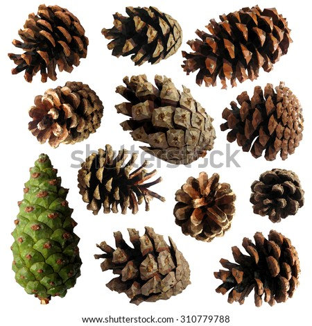 Pine cone - set of vector illustration - low poly triangles - stock vector