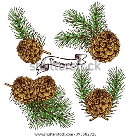 Pine cone set with ribbon in vintage style, vector background - stock vector