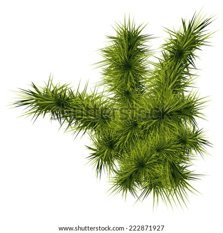 Pine, fir branches on the white background, New Year, vector, eps 10