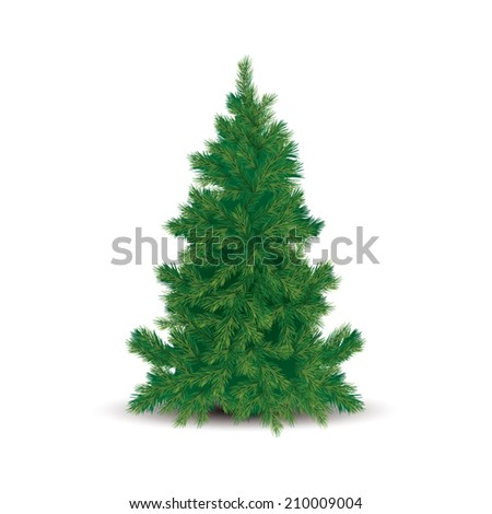 Pine tree isolated on white background. Vector illustration
