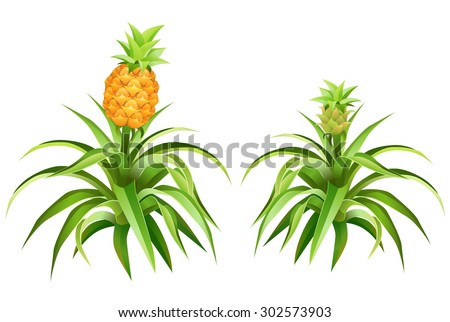 Pineapple Tree Stock Images, Royalty-Free Images & Vectors ...