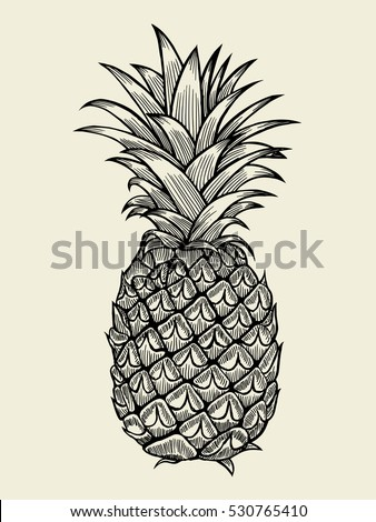 Pineapplefruit. Hand drawn vector sketch on beige