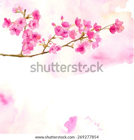 Pink background with branch of cherry blossom. Vector watercolor illustration of sakura. - stock vector