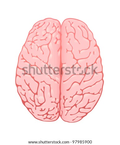 pink brain a top view - stock vector