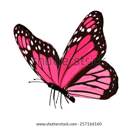 Pink butterfly , isolated on white - stock vector