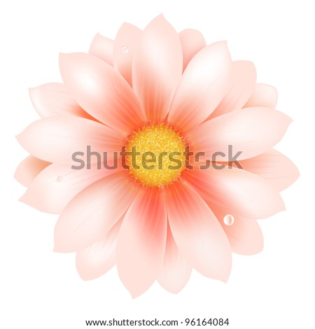 Pink Flower With Water Drop - stock vector
