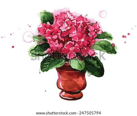 Pink flowers in a pot.  African violets. Spring flowers. Watercolor. This illustration is a great choice for Wedding, Birthday, Valentine, children book and magazine decoration. VECTOR. - stock vector