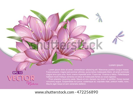 Pink lilies and flying dragonflies, vector illustration, eps-10