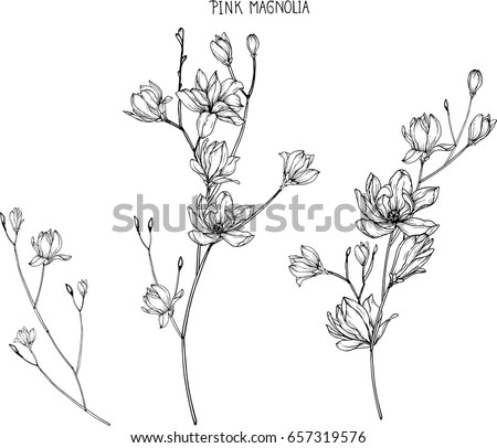 Pink Magnolia Flowers Drawing Sketch Lineart Stock Vector 657319576 Shutterstock
