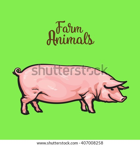Pink pig on, farm animals pig, sketch Vector illustration, one pig Image thick contented pigs for sale of meat, pig - stock vector