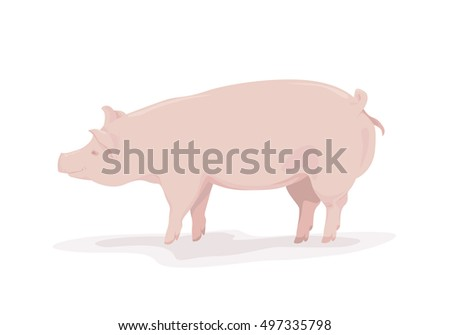 Pink pig on white background. Vector drawing of a pig. Vector illustration.