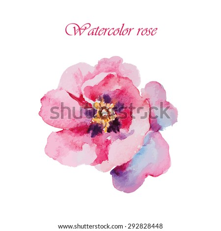 Pink rose watercolor. Vector illustration