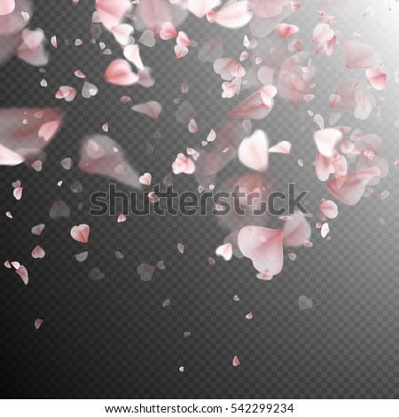 Pink sakura petals background. A lot of falling petals on transparent background. EPS 10 vector file included