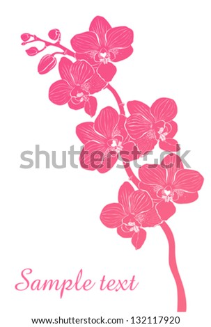 Pink streaked orchid flower, isolated on White background. Vector illustration - stock vector