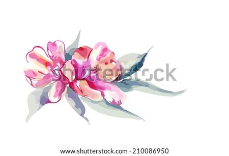 Pink Tulip - stock vector