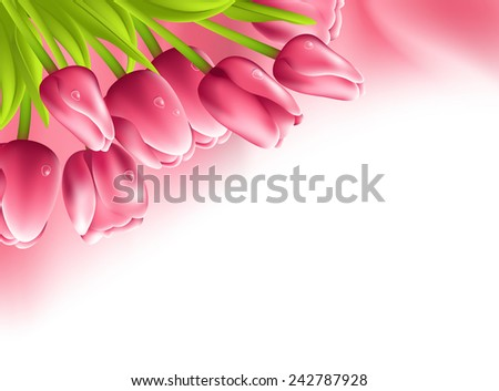 Pink tulips and silk isolated on white background - stock vector