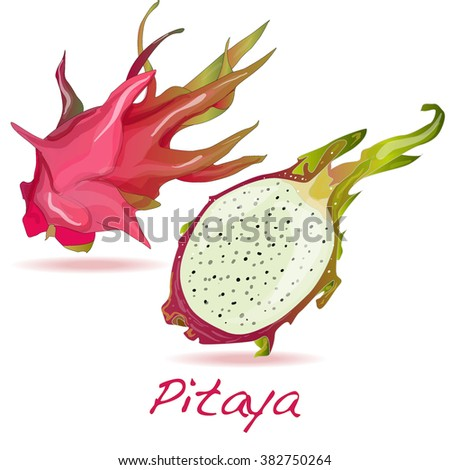 Pitaya or Dragon Fruit isolated against white background. Vector - stock vector