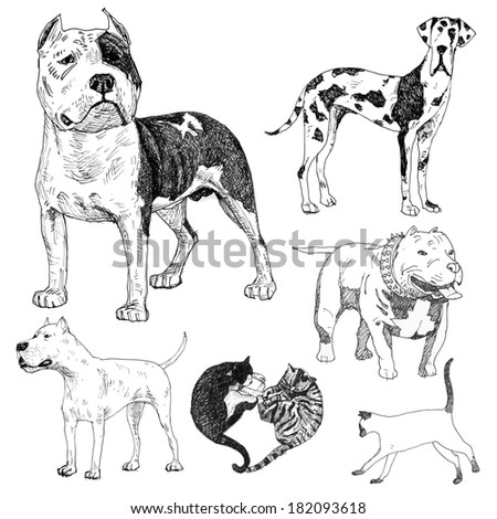 Pit Bull Head Illustration Stock Photos Images