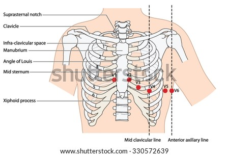 Placement Ecg Ekg Leads Showing Ribs Stock Vector (Royalty Free ...