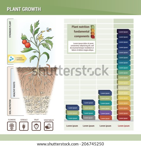 Plant growth - stock vector