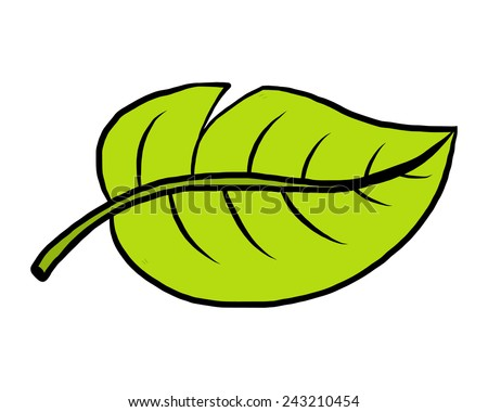 plant leaf / cartoon vector and illustration, hand drawn style, isolated on white background. - stock vector